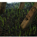 """Iminente, muito próximo então"", 2009, installation, two thousand palm tree seedlings (detail)"
