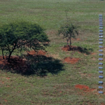 Trilha (Trail) | Brasília 2002 | Intervention in the lanscape | MDF, reflective film | 40x0,15x0,40m