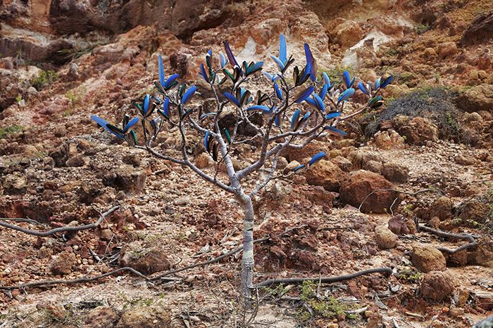 """""""Blue Bush"""", 2013, photograph, 80x120cm"""