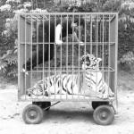"""Cage Rage"", 2011 foto Marcos Bonisson"