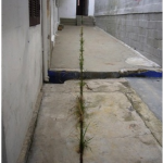 """""""Equal (cut)"""", 2011, Cut in the ground, soil, time, wild plants, variable dimensions (22meters at Ateliê 397)"""