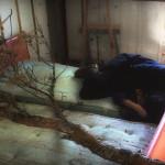 """'Metáfora', 2013, installation, film 18'00"""". André Severo and Paula Krause"""