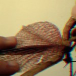 'frenzy', video, 2014, 11'.