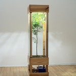 'In this land, whatever is planted will grow', 2015, wood, glass, water tank, air conditioner, thermometer, irrigation and fertilization system, timers, earth, fertilizers and pau-brazil tree, 200 x 50 x 50 cm, unique edition, photo Mauro Grisolli