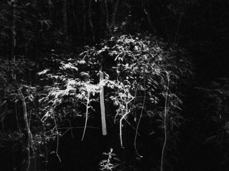 Um piano na selva